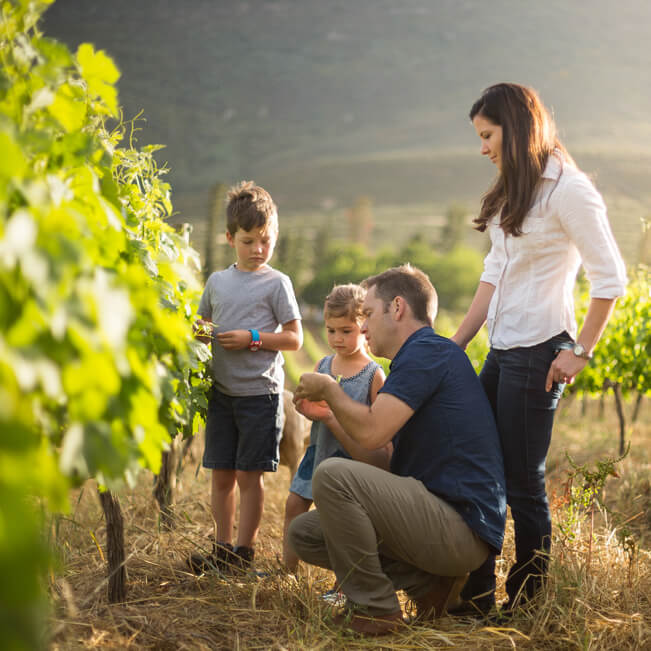 5b59c62078000-Mullineux and Leeu Family Wines07